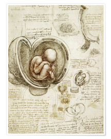 Premium poster Studies of embryos