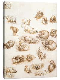 Canvas print  Study of a dog and a cat - Leonardo da Vinci