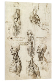 Foam board print  Neck muscles and bones of the foot - Leonardo da Vinci
