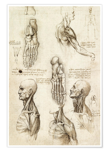Premium poster Neck muscles and bones of the foot