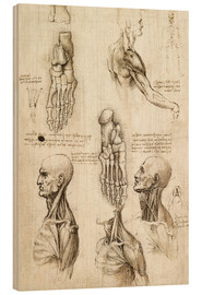 Wood print  Neck muscles and bones of the foot - Leonardo da Vinci