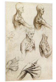 Foam board print  Anatomy of the Shoulder - Leonardo da Vinci