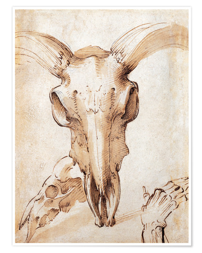 Premium poster Skull of a cow