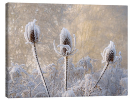 Canvas  Hoar frost on a teasel in wintertime - Katho Menden