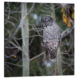 Aluminium print  Owl in the forest - Thomas Klinder