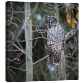 Canvas print  Owl in the forest - Thomas Klinder