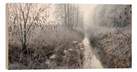 Wood  Morning mist and from over landscape - Lichtspielart