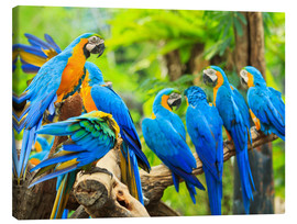 Canvas print  a swarm of Maccaws