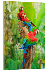 Wood print  Group of dark red macaws