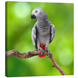 Canvas  African Grey Parrot