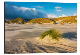 Aluminium print  Dunes on the island of Amrum, North Sea