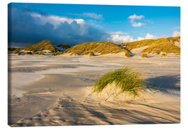 Canvas print  Dunes on the island of Amrum, North Sea