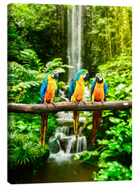 Canvas print  Three macaws in front of a waterfall
