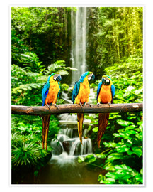 Premium poster Three macaws in front of a waterfall