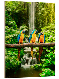 Wood print  Three macaws in front of a waterfall