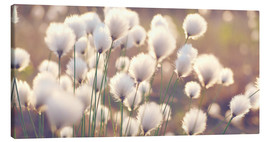 Canvas  Cottongrass - Julia Delgado