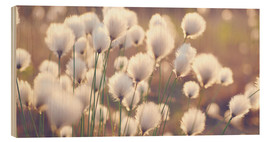 Wood  Cottongrass - Julia Delgado