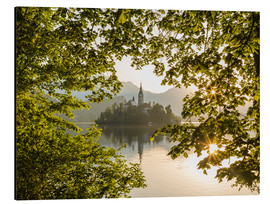 Aluminium print  Bled in the morning, Slovenia - Mike Clegg Photography