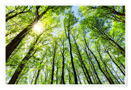 Premium poster Green forest in spring in the sunlight