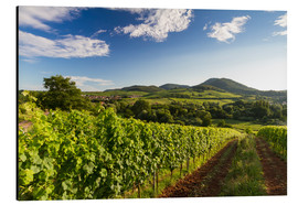 Aluminium print  Vineyards in Germany - Frank Fischbach