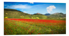 Foam board print  Poppies at Piano Grande, Italy - Frank Fischbach