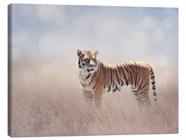 Canvas print  Tiger lady