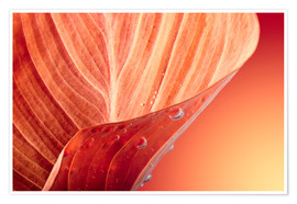 Premium poster  red autumn leaf with drops