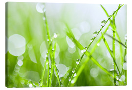 Canvas print  rain-wet grass