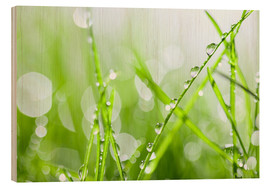 Wood print  Grass dew