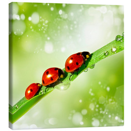 Canvas print  Three small beetle