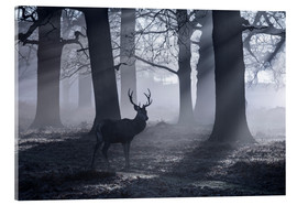 Acrylic print  A male red deer stag waits in the early morning mists of Richmond park, London. - Alex Saberi