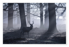 Premium poster  A male red deer stag waits in the early morning mists of Richmond park, London. - Alex Saberi