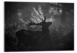 Acrylic print  A large male deer stag bellows out in a cold winter landscape of Richmond park, London. - Alex Saberi