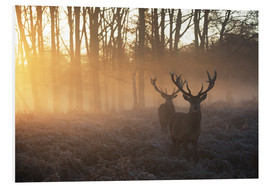 Foam board print  Two deers in Richmond Park, London - Alex Saberi