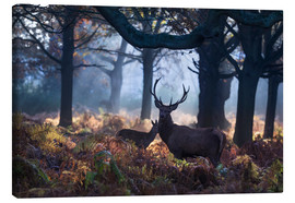 Canvas print  A red deer stag in a misty forest in Richmond park, London. - Alex Saberi