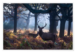 Premium poster A red deer stag in a misty forest in Richmond park, London.