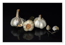 Premium poster garlic family