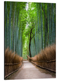 Alu-Dibond  Bamboo Forest in Kyoto Sagano Arashiyama, Japan - Jan Christopher Becke
