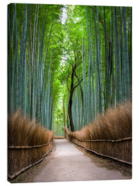 Canvas  Bamboo Forest in Kyoto Sagano Arashiyama, Japan - Jan Christopher Becke