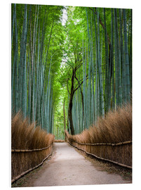 Forex  Bamboo Forest in Kyoto Sagano Arashiyama, Japan - Jan Christopher Becke