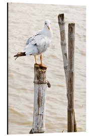 Aluminium print  Seagull on pole