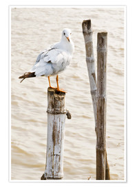Poster  Seagull on pole