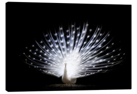 Canvas print  White Peacock Studio