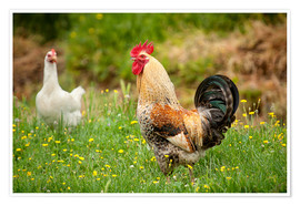 Chickens in the meadow
