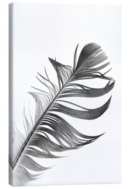 Canvas print  monochrome spring