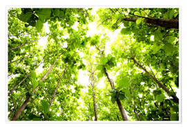 Poster  Green Tree Canopy