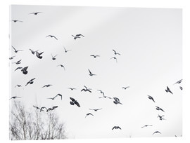 Acrylic print  Flock of birds