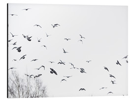 Aluminium print  Flock of birds