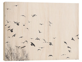 Wood  Flock of birds