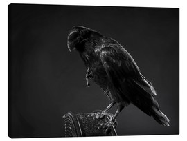 Canvas print  Crow